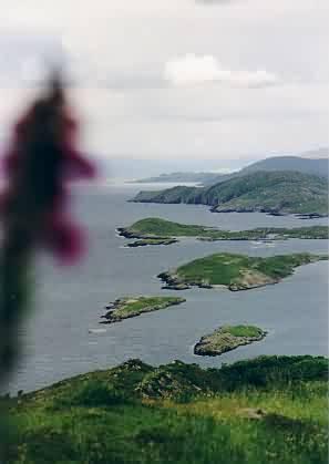 Ein Fingerhut und die Beara-Hälfte der Kenmare Bay