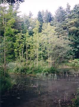 Wunderschöner Tümpel im Nationalpark