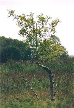Im Nationalpark am Ufer des Lough Derg
